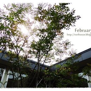 ■2月の「中庭」と「ヒメイワダレソウ」 -2020-