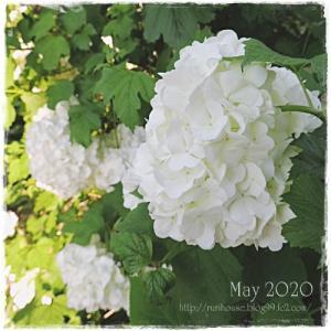 ■5月の外庭 -2020-