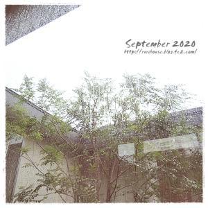 ■9月の「中庭」と「ヒメイワダレソウ」 -2020-