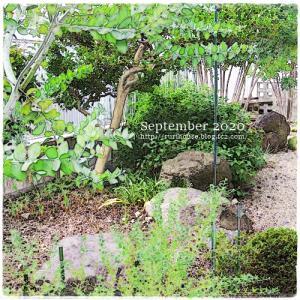 ■9月の外庭 -2020-