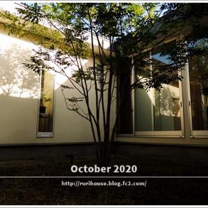 ■10月の「中庭」と「ヒメイワダレソウ」 -2020-