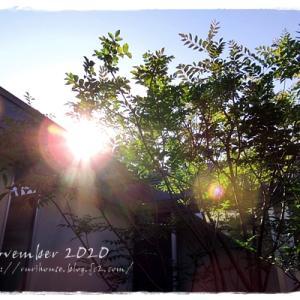 ■11月の「中庭」と「ヒメイワダレソウ」 -2020-
