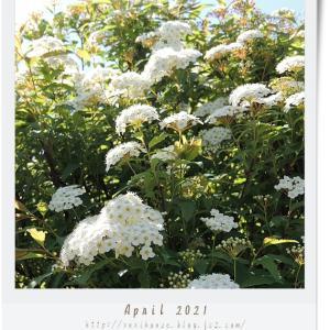 ■4月の外庭 -2021-