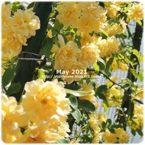 ■5月の外庭 -2021-