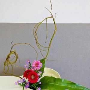 繊細な花たちと豪快なウンリュウヤナギ