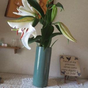 カサブランカの花。老々介護