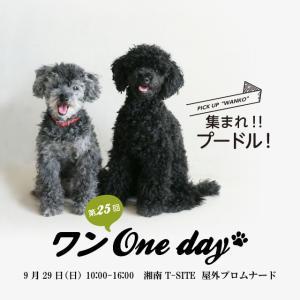 南町田グランベリーパークで『イヌなで』セミナー開催します。