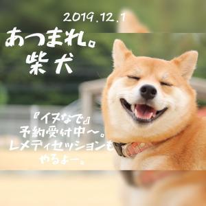 集まれ柴犬!!!を12月1日開催。