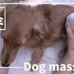 犬への温灸やり方動画