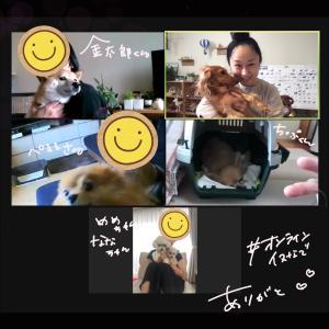 楽しかったオンライン『イヌなで』セミナー!!