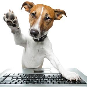 【10月スタート】犬のお仕事のいろはを学ぶオンライン講座