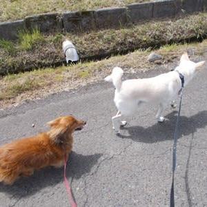 令和元年のお散歩