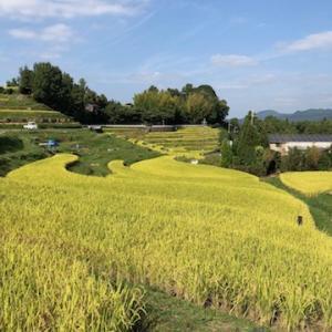 千早赤阪村の棚田風景です。