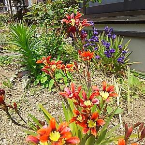 楽しみな 春の庭!