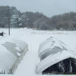 3/29に大雪
