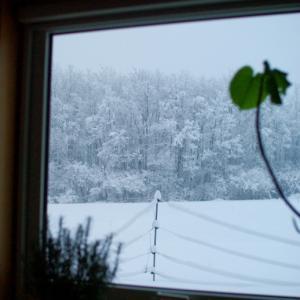 重たい積雪