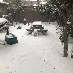 雪が降り続くよ。