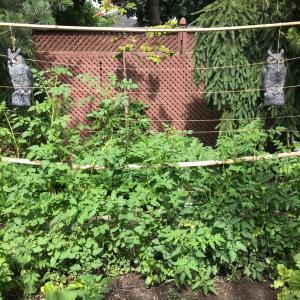 ジャングル菜園。