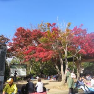富士山くっきり&ノササゲ@高尾山晩秋の花探し