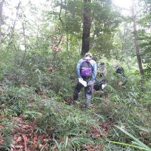 青梅の森、植生調査
