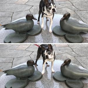 鳥よォ〜鳥よォ〜♩