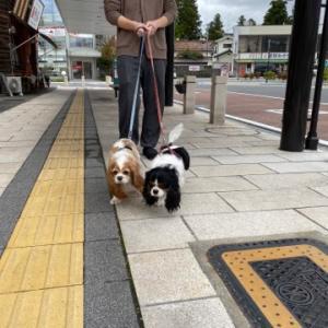 散歩に参るぞ。