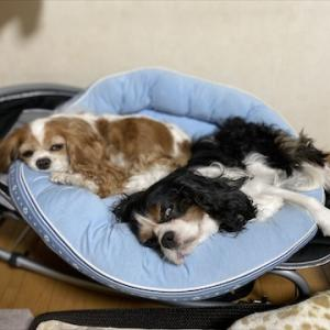 犬をダメにする椅子。