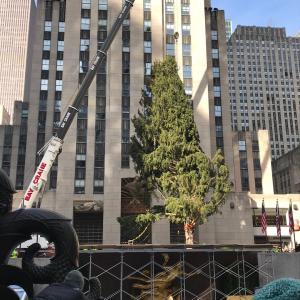 ロックフェラーのクリスマスツリー設置に遭遇♪