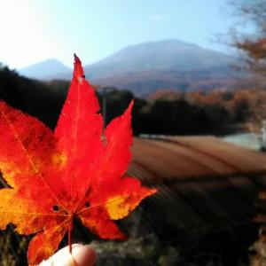 秋の夜長セットと私の今秋の過ごし方