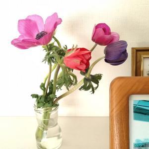 今週のお花はアネモネ