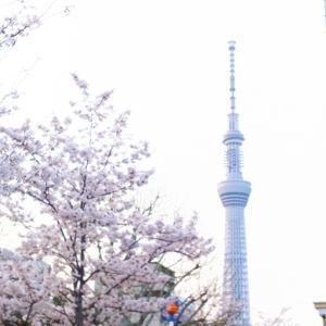 桜いろいろ