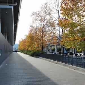 梅小路公園 紅葉散歩③。