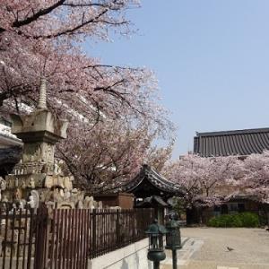 壬生寺花まつり。