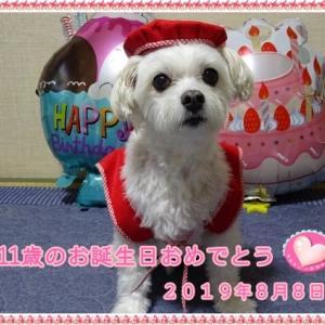 祝11歳☆お誕生日おめでとう。
