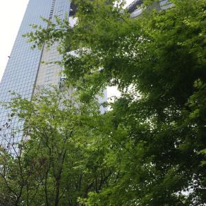 新梅田シティ、ご近所で新緑