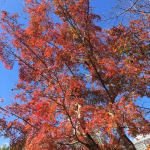 比叡山麓の紅葉〜お誕生月だからこそ