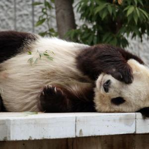 動物園で一番見たい動物は?