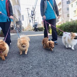 Go! Go! Hikaru!