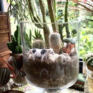 長く楽しめるインドアsucculents