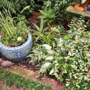 ツルボなど9月の花
