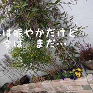 花壇の植物にも つぼみが~~♪