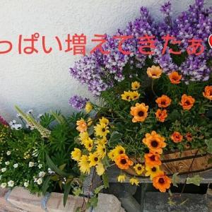 庭いじりがこんなにも楽しいなんて(=^・・^=)♪