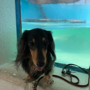 さようなら、ワンコと行ける水族館・油壺マリンパーク 2