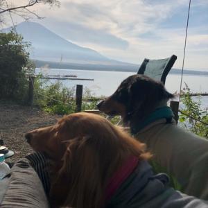 遅い夏休み* ワンコとキャンプ(山中湖フォレストコテージ) 2