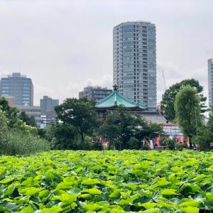 上野動物園が予約制で再開しましたよ