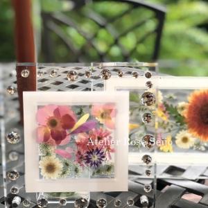 透明感あふれる夏にぴったりのプラントアート2種!