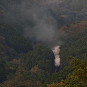 緑の森に光るヘッドライトと湧き上がる煙 - 2019年晩秋・山口線 -