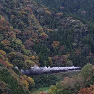 紅葉の山を白煙の矢が突き抜ける - 2019年紅葉・山口線 -