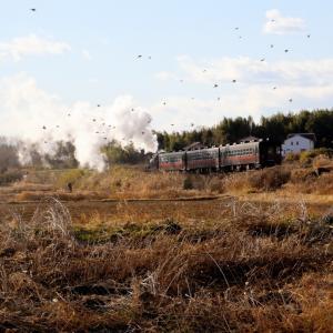冬の午後の陽射しと冬鳥の中を走り去る汽車 - 2020年・真岡鉄道 -