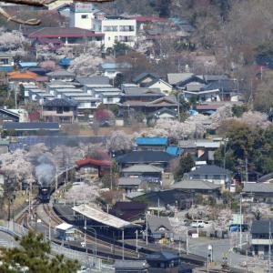 長瀞から上長瀞へ続く桜並木 - 2019年・秩父鉄道 -